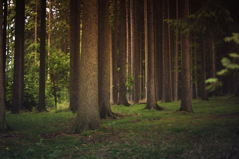 Odkup lesa, odkup hlodovine, sečnja gozda Zasavje gallery photo no.2
