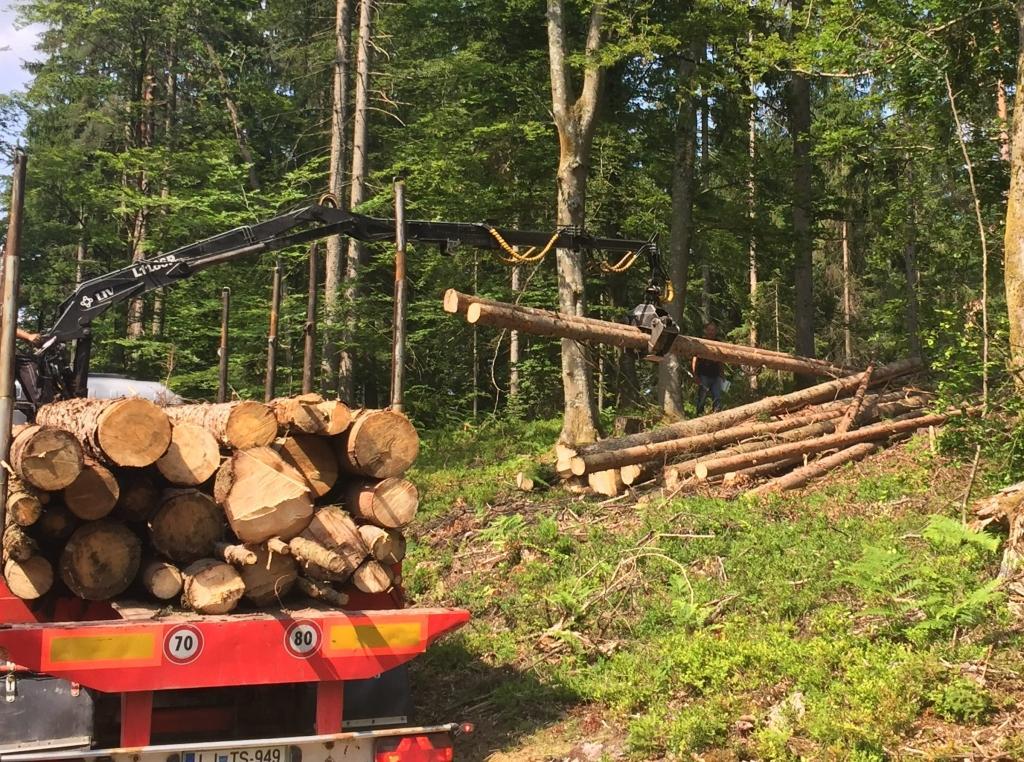 Odkup lesa, odkup hlodovine, sečnja gozda Zasavje gallery photo no.4