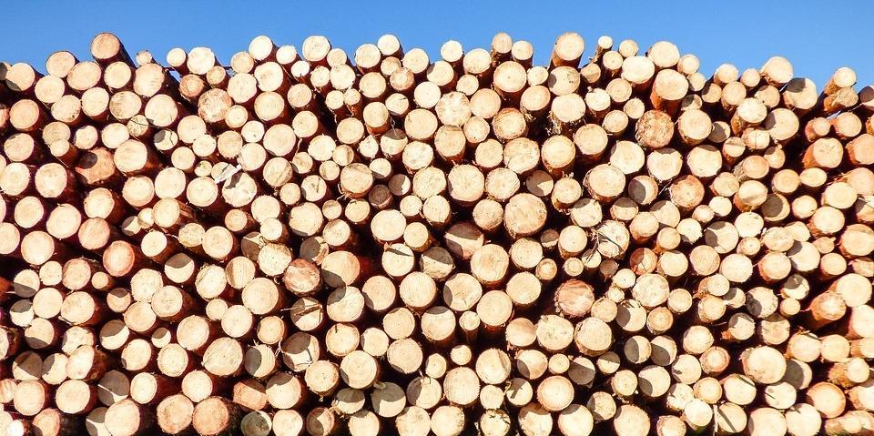 Odkup lesa, odkup hlodovine, sečnja gozda Zasavje gallery photo no.8