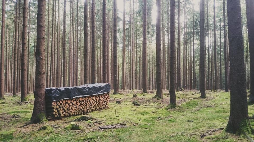 Odkup lesa, odkup hlodovine, sečnja gozda Zasavje gallery photo no.9