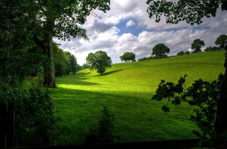 Odkup lesa, odkup hlodovine, sečnja gozda, cena lesa Zasavje gallery photo no.10