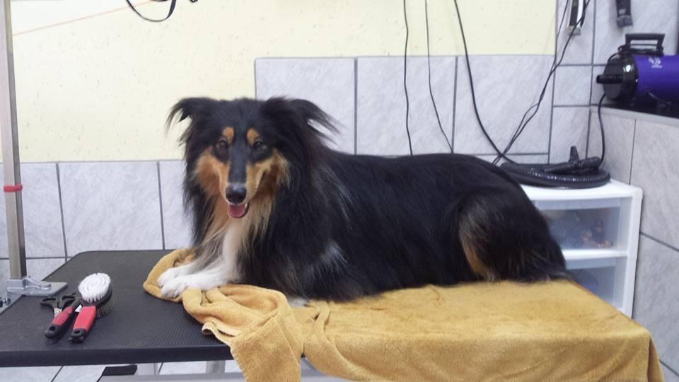 Pasji salon, striženje psov, Jesenice gallery photo no.0