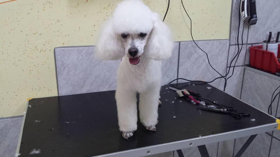 Pasji salon, striženje psov, Jesenice gallery photo no.1