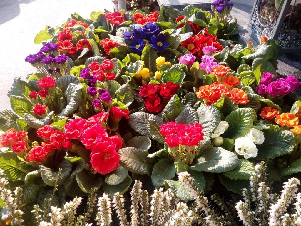 Pogrebno cvetje - Cvetličarna Omers, Domžale gallery photo no.4