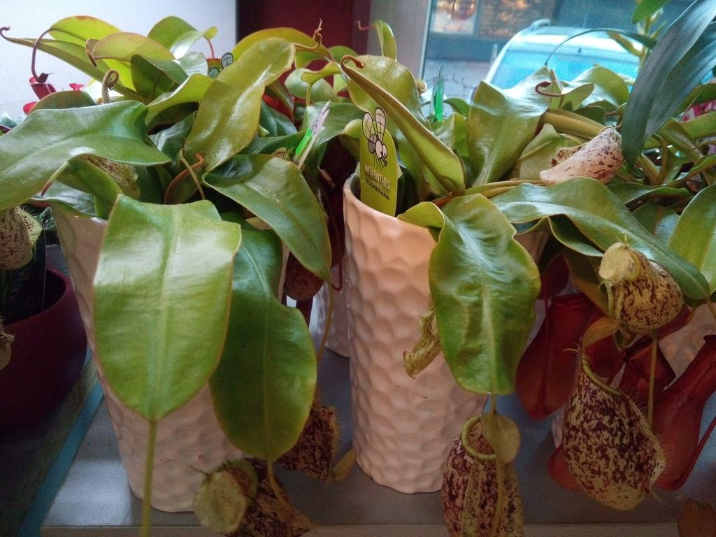 Pogrebno cvetje - Cvetličarna Omers, Domžale gallery photo no.16