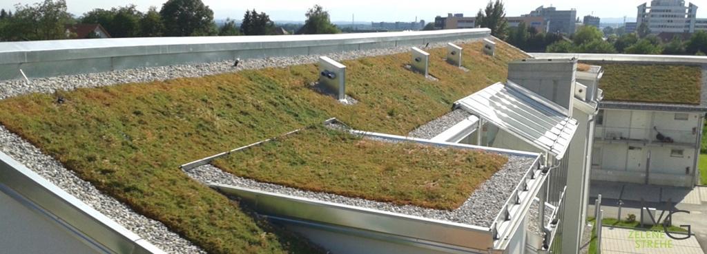 MG Zelene strehe - načrtovanje in izvedba zelenih streh gallery photo no.5