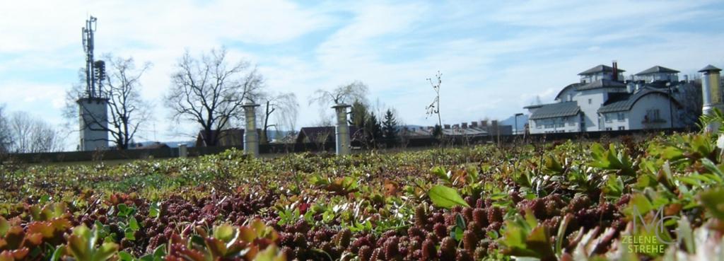 MG Zelene strehe - načrtovanje in izvedba zelenih streh gallery photo no.6