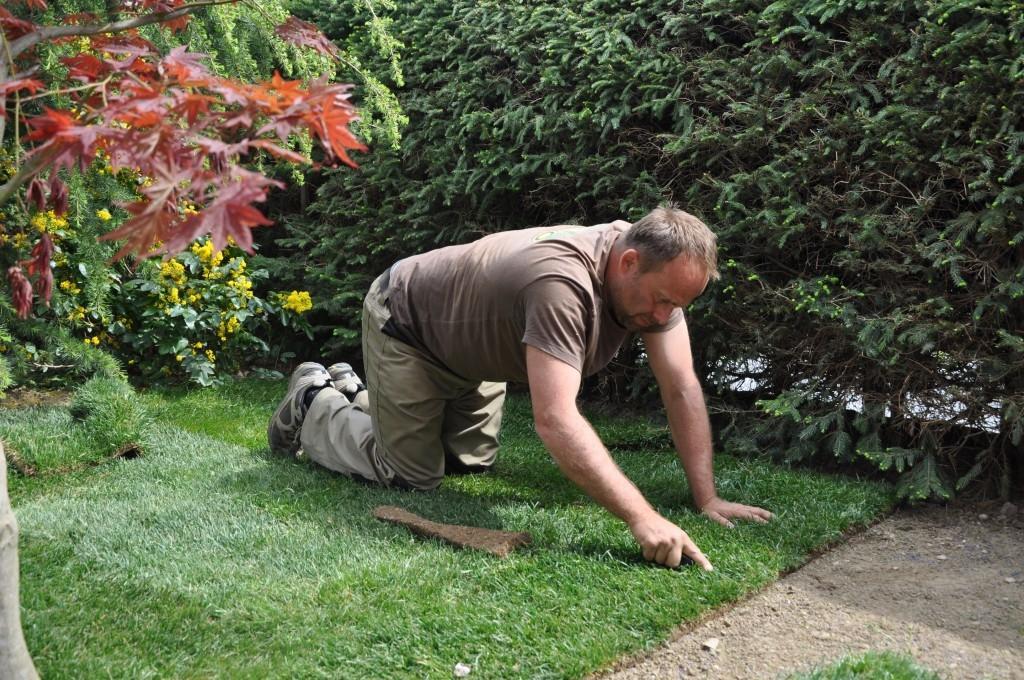 Urejanje, vzdrževanje vrtov, polaganje, setev trave, obrezovanje drevja, žive meje - Vrtnarstvo Šink gallery photo no.5