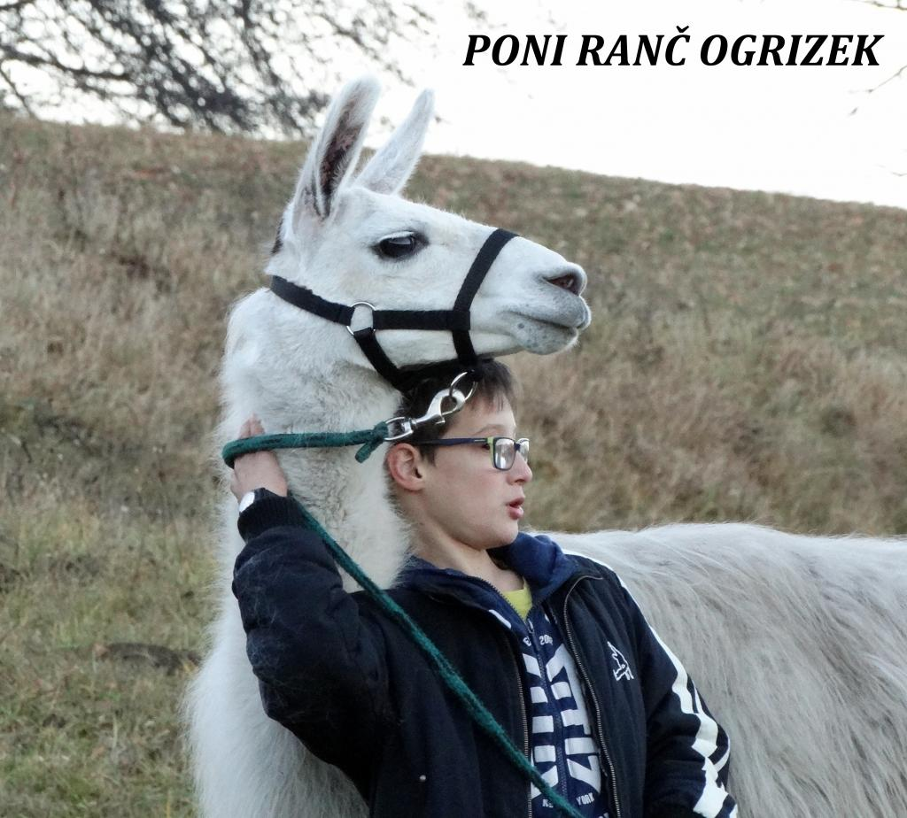 Poni ranč Ogrizek Podčetrtek gallery photo no.34