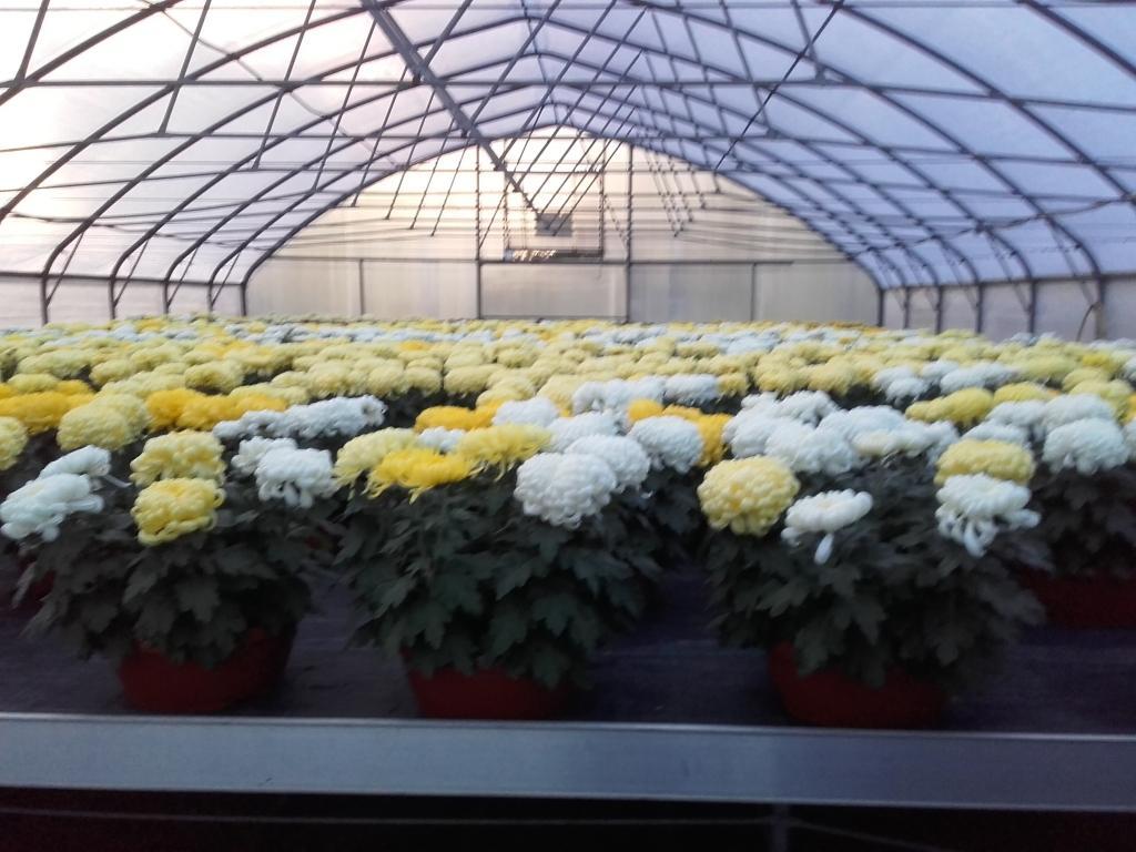 Prodaja rož, prodaja sadik, vrtnarstvo Vekjet, Maribor, Štajerska gallery photo no.10