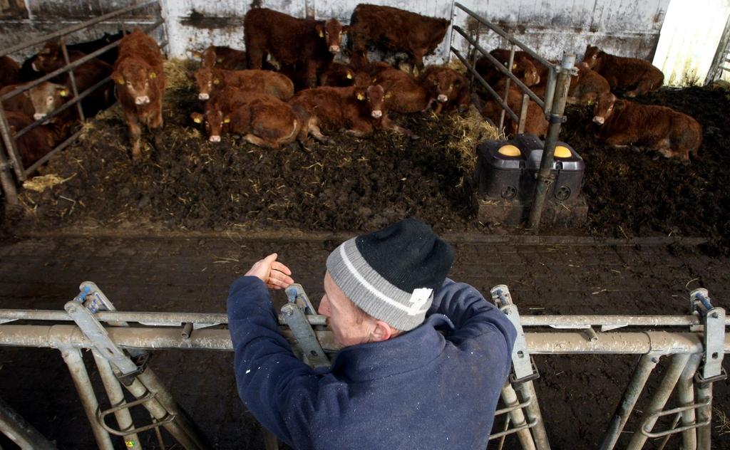 Reja plemenske živine - Kmetija Rajhenav, Kočevje gallery photo no.2