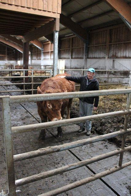 Reja plemenske živine - Kmetija Rajhenav, Kočevje gallery photo no.10