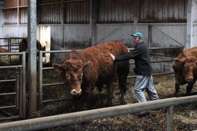Reja plemenske živine - Kmetija Rajhenav, Kočevje gallery photo no.9