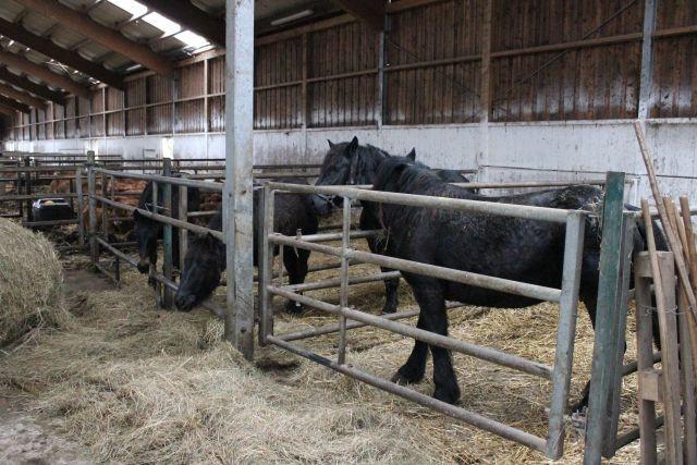 Reja plemenske živine - Kmetija Rajhenav, Kočevje gallery photo no.15