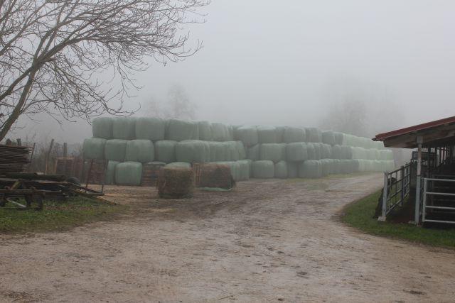 Reja plemenske živine - Kmetija Rajhenav, Kočevje gallery photo no.17
