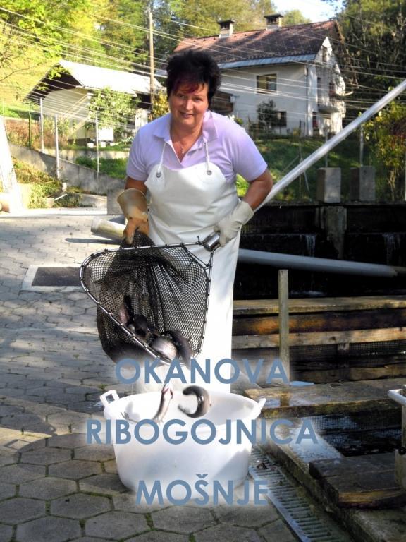 Ribogojnica Okanova - sveže postrvi, Radovljica gallery photo no.4