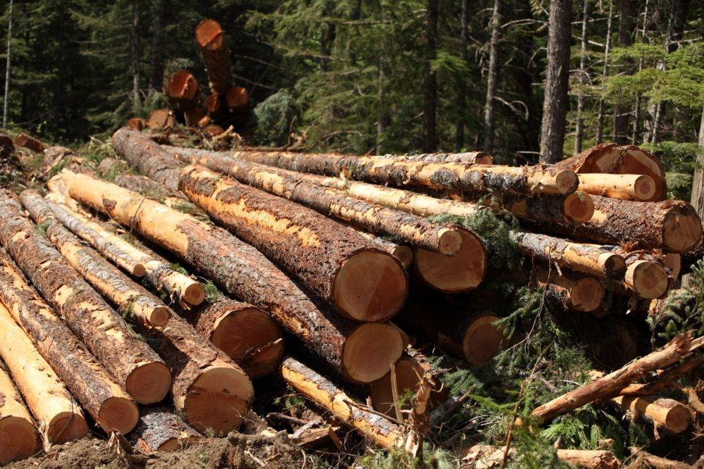 Strojna sečnja gozda, gozdarske storitve Postojna, odkup in prodaja lesa, Postojna gallery photo no.0