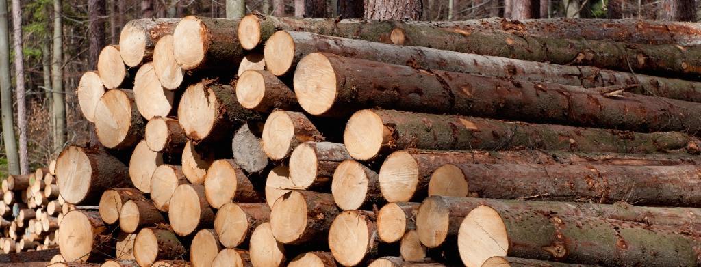 Strojna sečnja gozda, gozdarske storitve Postojna, odkup in prodaja lesa, Postojna gallery photo no.1