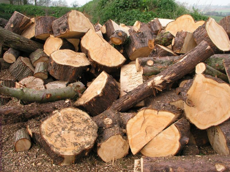 Strojna sečnja gozda, gozdarske storitve Postojna, odkup in prodaja lesa, Postojna gallery photo no.2