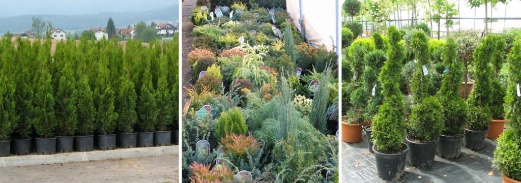 Tlakovanje dvorišč - Vrtni inženiring Bilban, Medvode gallery photo no.9