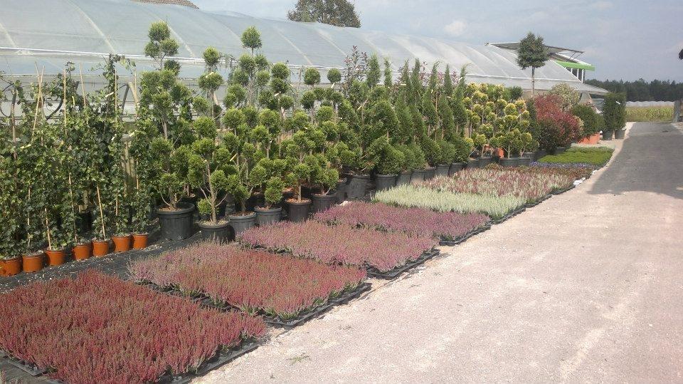 Tlakovanje dvorišč - Vrtni inženiring Bilban, Medvode gallery photo no.10