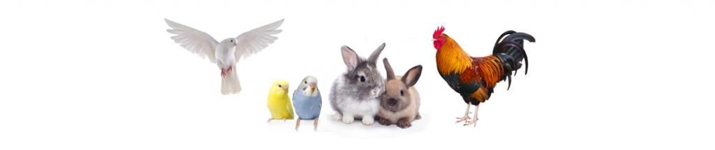 Trgovina za male živali Buba Grosuplje - Hrana za male živali, hrana za pse, mačke in glodalce gallery photo no.12