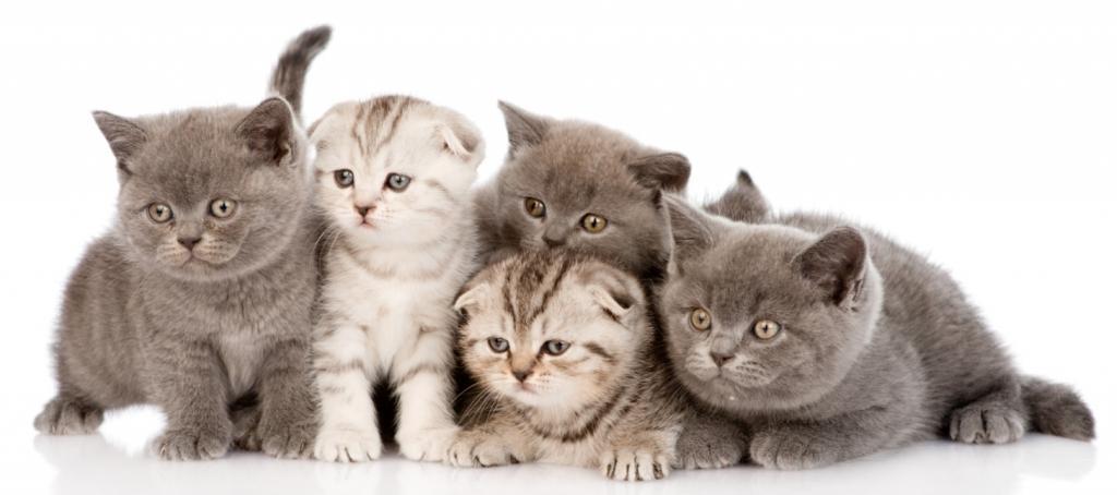 Trgovina za male živali Buba Grosuplje - Hrana za male živali, hrana za pse, mačke in glodalce gallery photo no.15