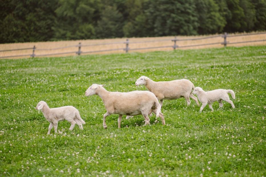 Turistična kmetija Firbas, Štajerska-Pomurje-Prekmurje gallery photo no.15