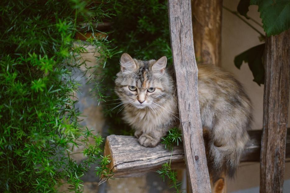 Turistična kmetija Firbas, Štajerska-Pomurje-Prekmurje gallery photo no.20