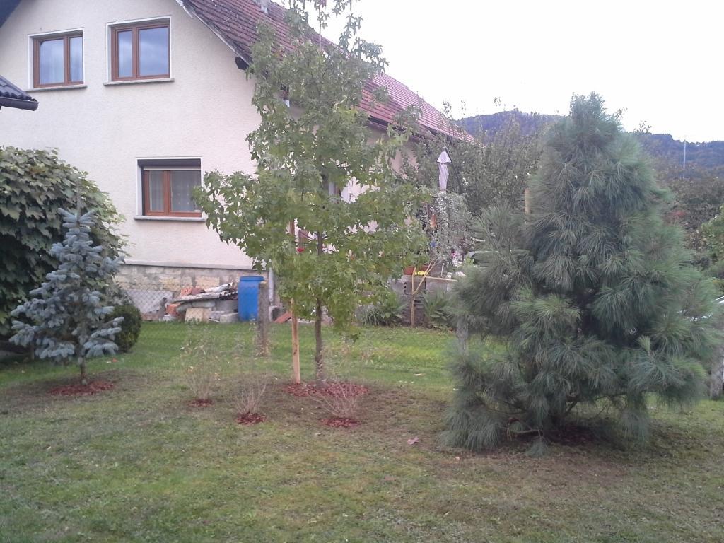 Urejanje, vzdrževanje vrtov, polaganje, setev trave, obrezovanje drevja, žive meje - Vrtnarstvo Šink gallery photo no.56