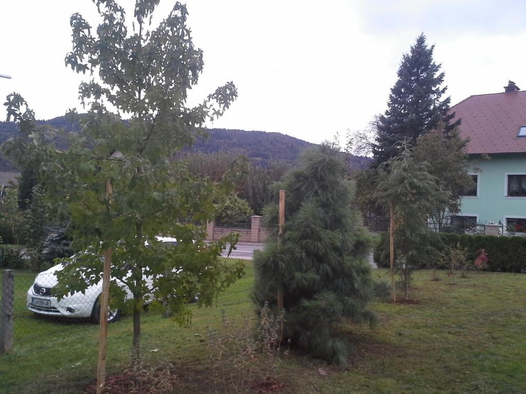 Urejanje, vzdrževanje vrtov, polaganje, setev trave, obrezovanje drevja, žive meje - Vrtnarstvo Šink gallery photo no.57