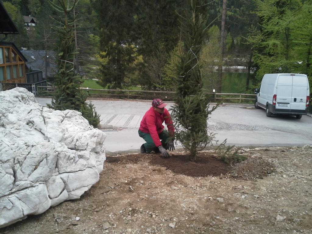 Urejanje, vzdrževanje vrtov, polaganje, setev trave, obrezovanje drevja, žive meje - Vrtnarstvo Šink gallery photo no.65