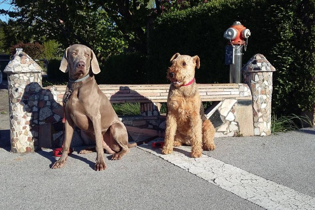 V.I.Pes, varstvo in nega psov, Šenčur gallery photo no.2