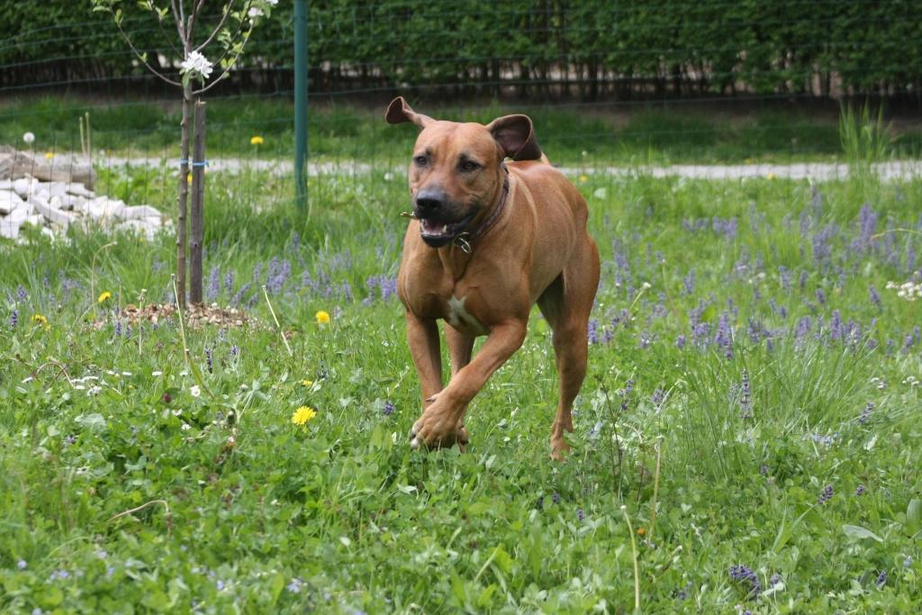 V.I.Pes, varstvo in nega psov, Šenčur gallery photo no.3