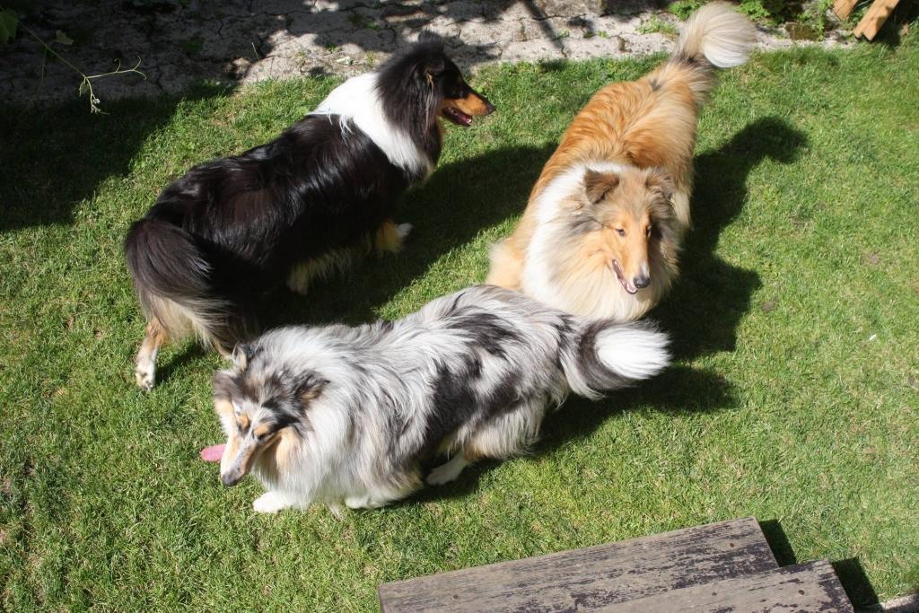 V.I.Pes, varstvo in nega psov, Šenčur gallery photo no.4