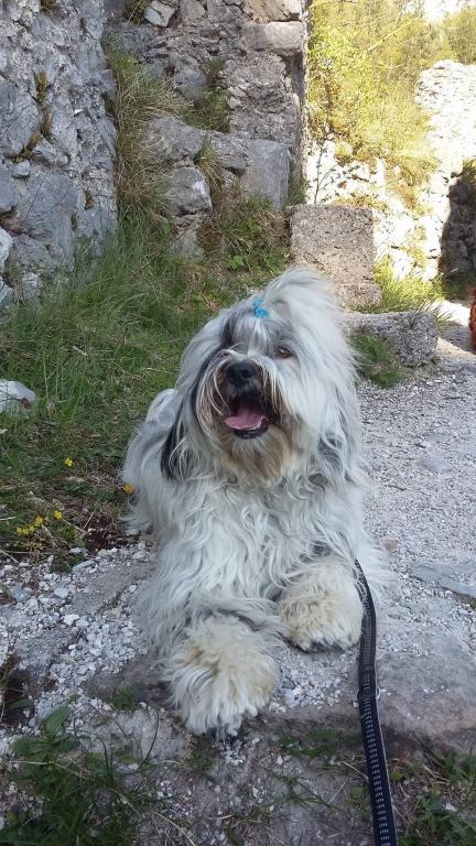 V.I.Pes, varstvo in nega psov, Šenčur gallery photo no.6