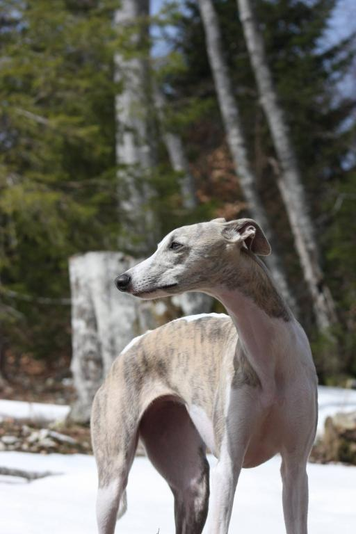 V.I.Pes, varstvo in nega psov, Šenčur gallery photo no.7