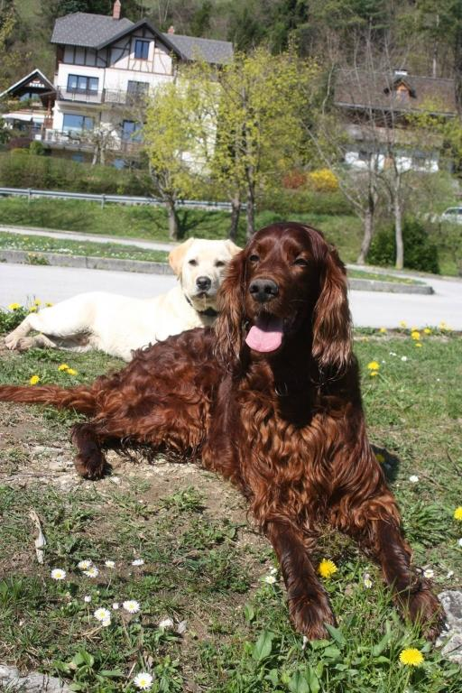 V.I.Pes, varstvo in nega psov, Šenčur gallery photo no.9