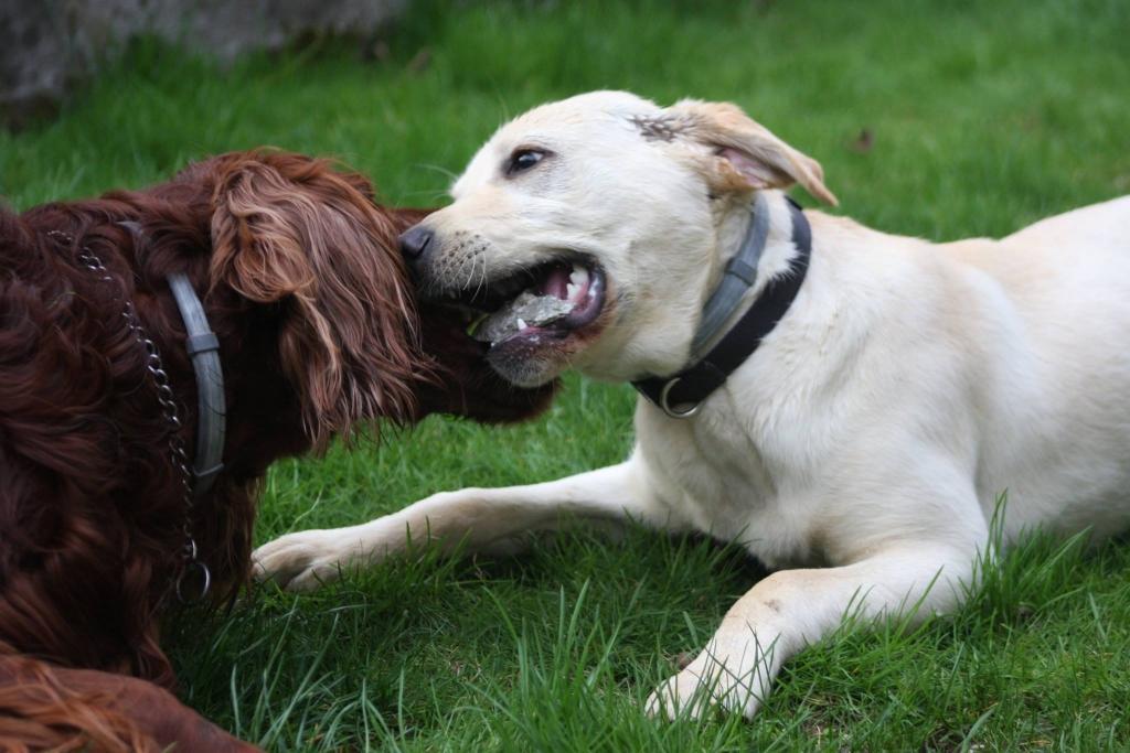 V.I.Pes, varstvo in nega psov, Šenčur gallery photo no.10