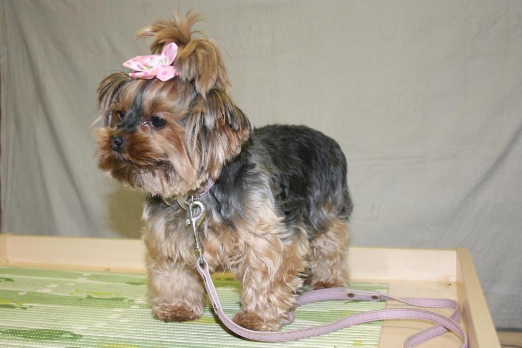 V.I.Pes, varstvo in nega psov, Šenčur gallery photo no.11