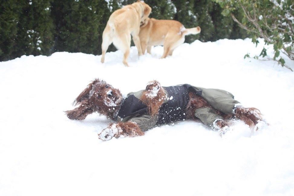 V.I.Pes, varstvo in nega psov, Šenčur gallery photo no.12
