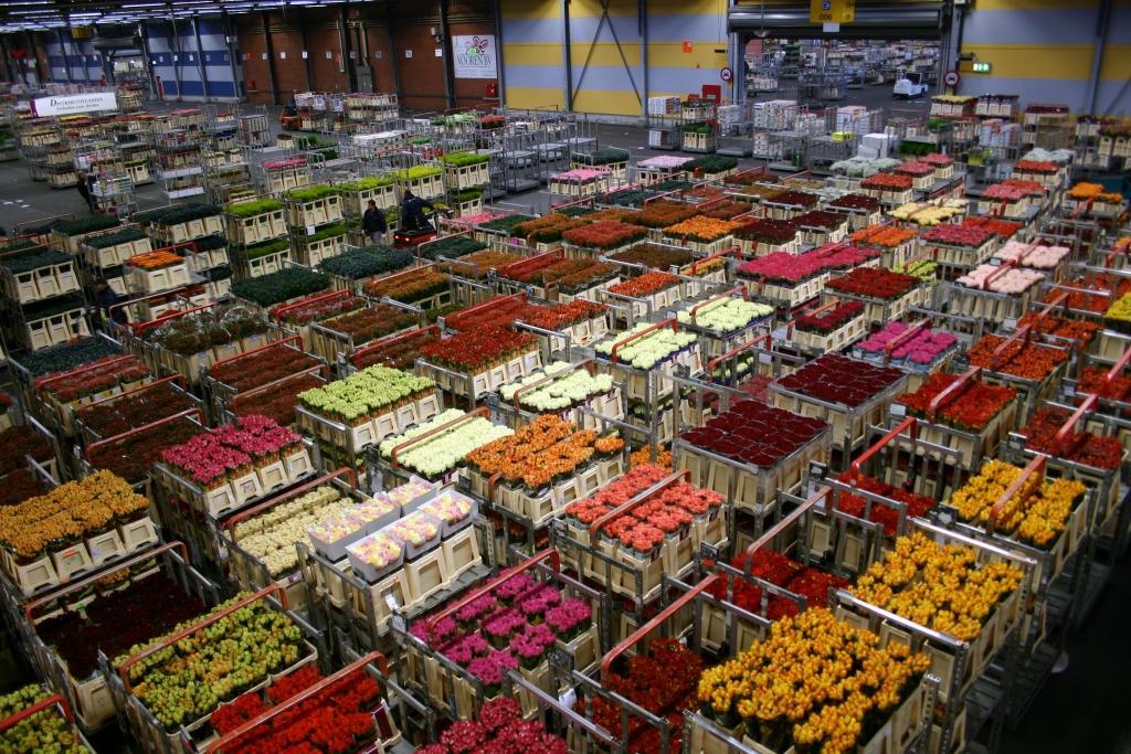 Veleprodaja cvetja gallery photo no.0