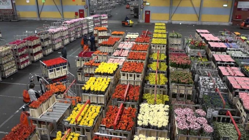 Veleprodaja cvetja gallery photo no.2