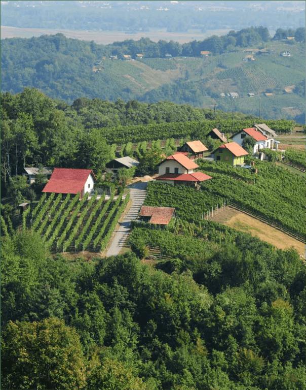 Vinogradniško turistično društvo Gadova Peč gallery photo no.9