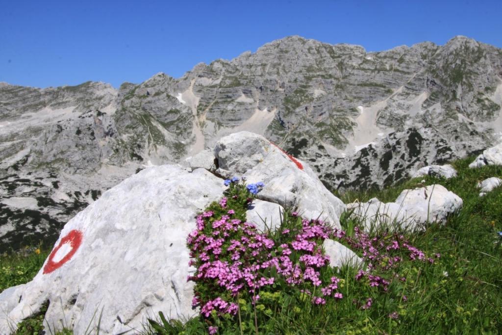 Z avtom dostopna planinska koča, s kolesom dostopna planinska koča, postojanka na poti na triglav gallery photo no.12