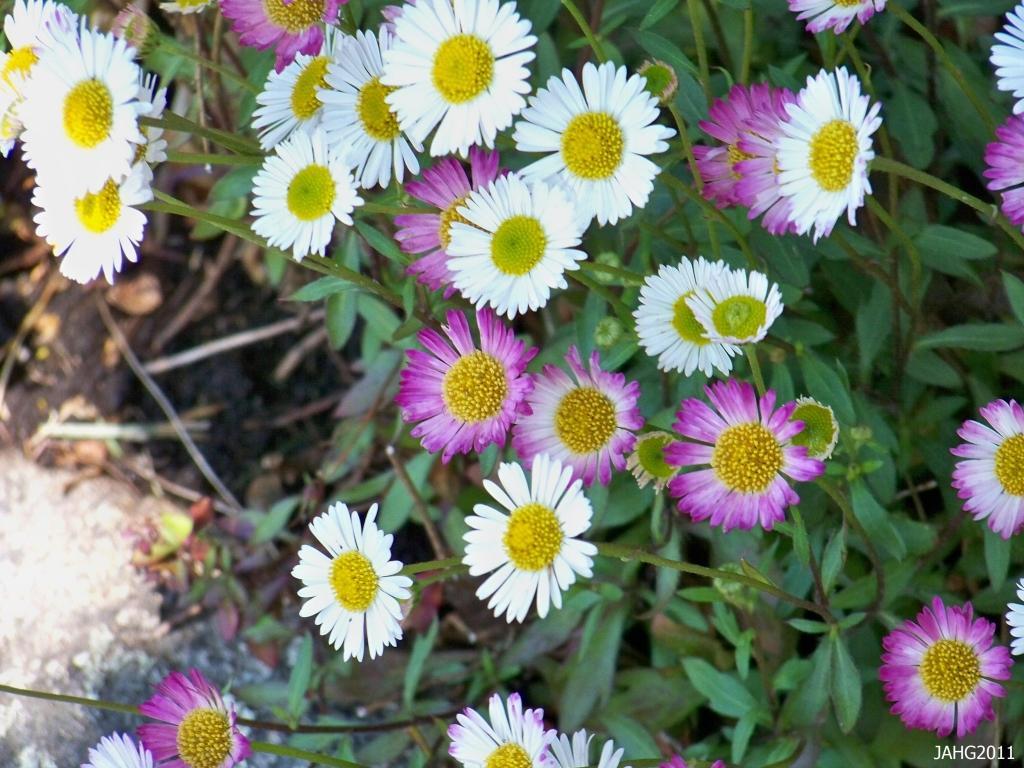 Cvetlični, Darilni Boutique Tila, Šmartno pri Litiji gallery photo no.6