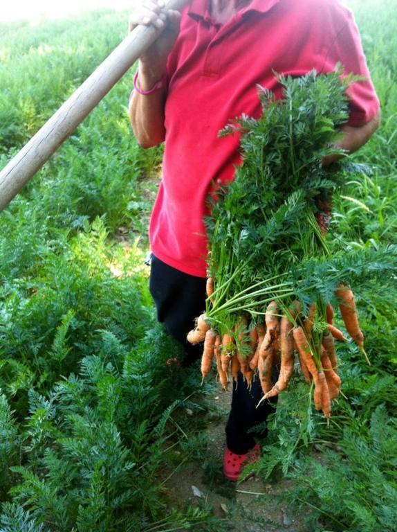 Vzgoja in pridelovanje sadik in vrtnin - Vrtnarija Artičoka, Cerklje na Gorenjskem gallery photo no.0