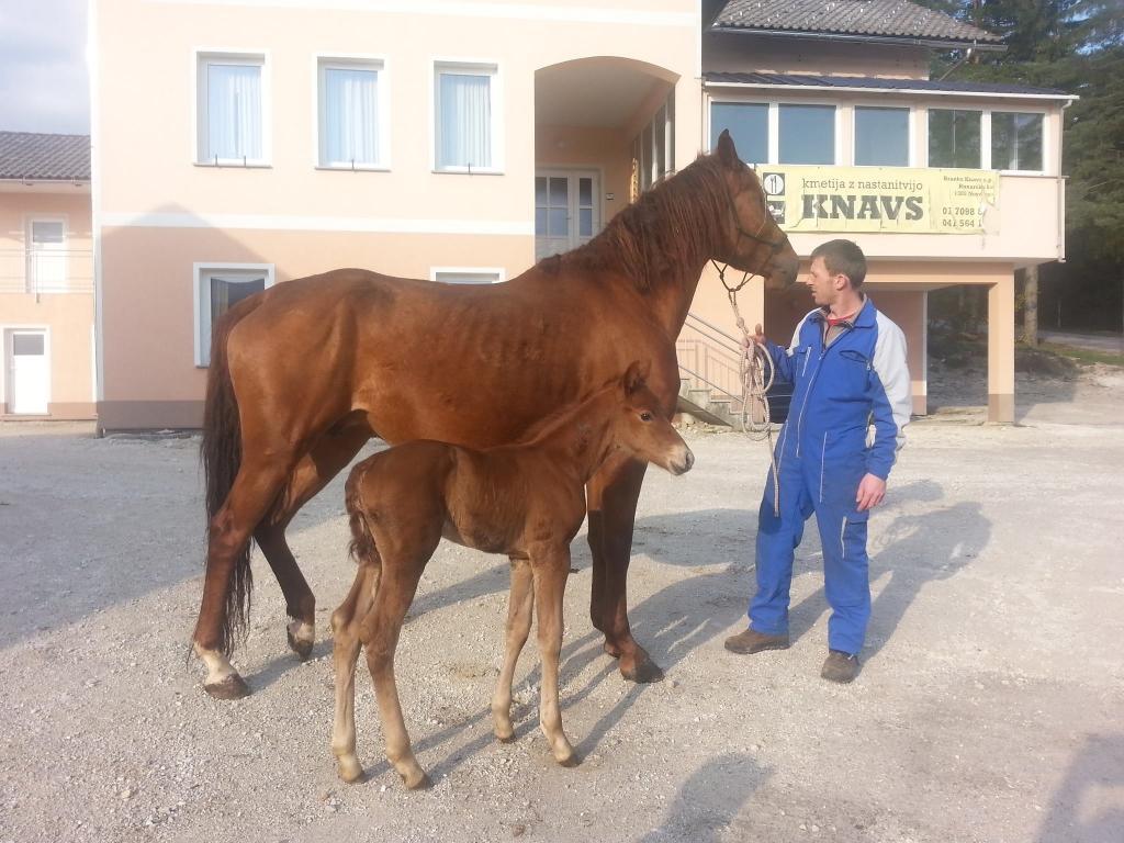 Kmetija Knavs, Bloke gallery photo no.11