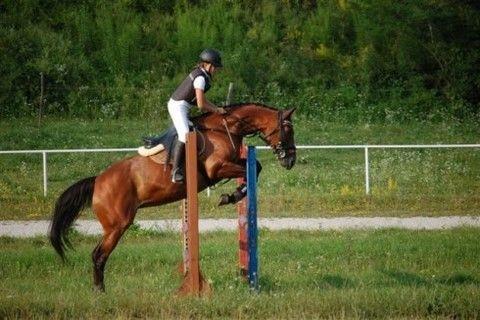 Konjeniški klub Lesce - Bled gallery photo no.18