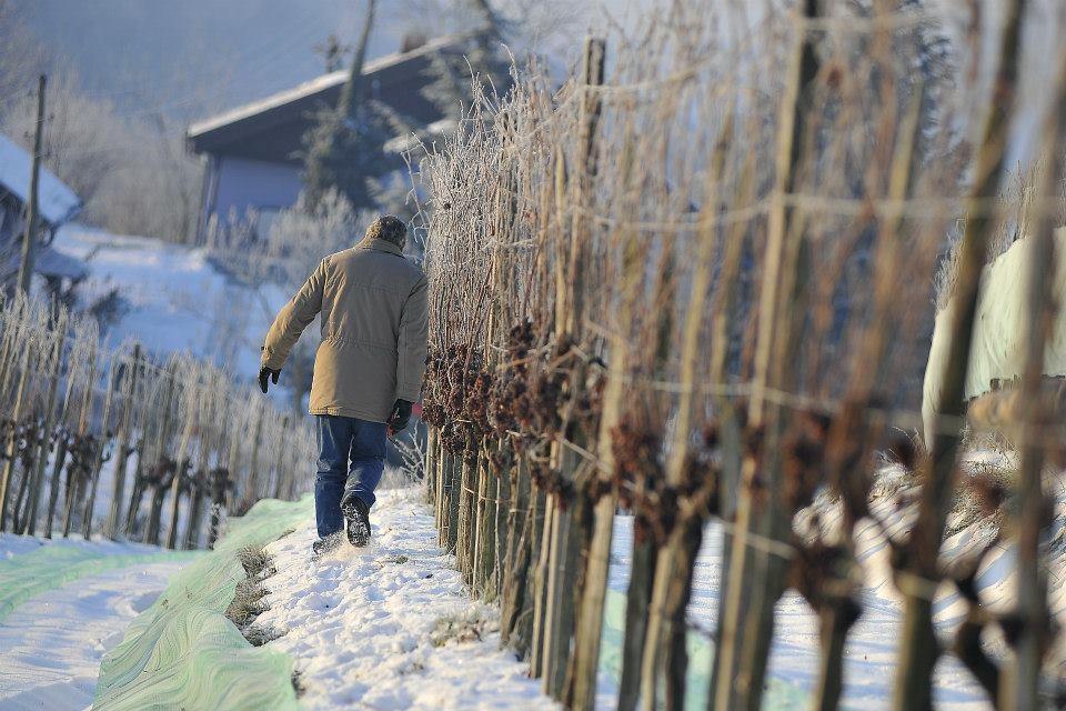 Sagmeister - Hiša pesmi in vina gallery photo no.16